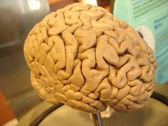 Scientist Pinpoint Brains' Fear Factory